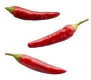 красный цвет перца Стоковая Фотография RF