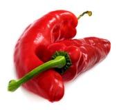 красный цвет перца Стоковые Фотографии RF