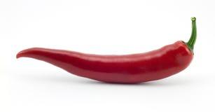 красный цвет перца chili Стоковые Изображения RF