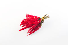 красный цвет перца chili Стоковые Изображения