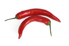 красный цвет перца chili Стоковая Фотография RF