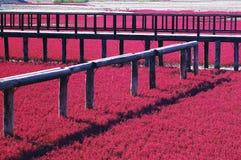 красный цвет пляжа Стоковое Изображение