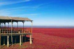 красный цвет пляжа Стоковое фото RF