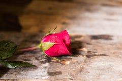 красный цвет поднял Зеленое черенок помещенное на старом деревянном поле стоковая фотография