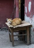 Красный цвет покинул кота лежа в улице, на стуле стена шелушения краски грязи Стоковая Фотография