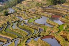 красный цвет поля водорослей terraced Стоковое Изображение