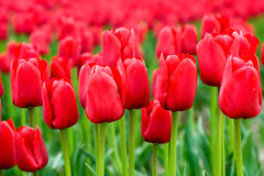 красный цвет поля стоковое изображение