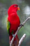 красный цвет попыгая Стоковое фото RF