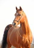 красный цвет портрета лошади Стоковое Фото