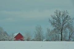 Красный цвет полинянный в снеге Стоковые Изображения RF
