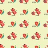 Красный цвет предпосылки картины guarana ягод Goji безшовный приносить диетическая иллюстрация вектора еды энергии чертежа бесплатная иллюстрация