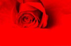 красный цвет предпосылки поднял Стоковое Изображение RF