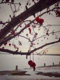 Красный цвет приносить смертная казнь через повешение от дерева в зиме стоковая фотография rf