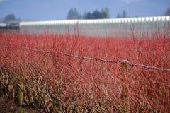 Красный цвет природы Стоковые Изображения