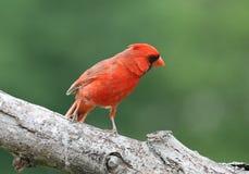красный цвет просто стоковые фото