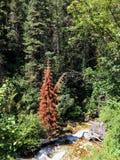 Красный цвет против зеленого цвета Стоковое Изображение RF