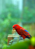 красный цвет птицы Стоковые Фотографии RF