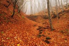 красный цвет пущи осени стоковые фото