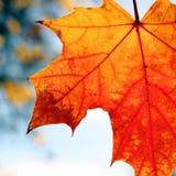 красный цвет разрешения падения Стоковое Фото