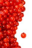 красный цвет рамки смородины Стоковое фото RF