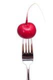 красный цвет редиски вилки Стоковая Фотография