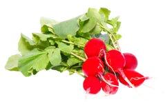 красный цвет редиски пука Стоковое Фото