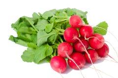 красный цвет редиски пука Стоковые Фото