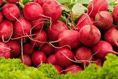 красный цвет редиски Стоковые Фото