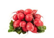 красный цвет редиски Стоковые Фотографии RF