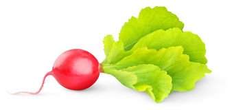 красный цвет редиски Стоковое Фото