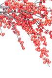 красный цвет рождества ветви ягод Стоковые Фотографии RF