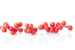 красный цвет рождества ветви ягод Стоковое Изображение RF
