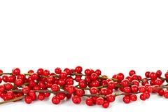 красный цвет рождества граници ягод Стоковое Изображение