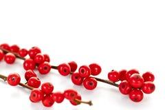 красный цвет рождества ягод Стоковая Фотография