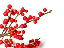 красный цвет рождества ягод Стоковое Изображение