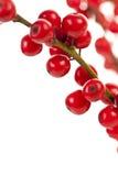 красный цвет рождества ягод Стоковые Изображения