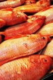красный цвет рыб свежий Стоковое Изображение