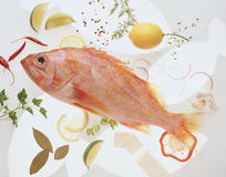 красный цвет рыб Стоковое Фото