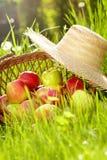 красный цвет сада корзины яблок Стоковая Фотография RF