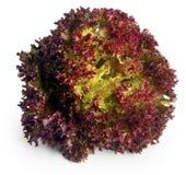 красный цвет салата листьев стоковое фото