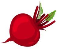 красный цвет свеклы Стоковые Фотографии RF