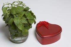 красный цвет сердца формы коробки Оно стоит на белой предпосылке Рядом с вазой букет бальзама лимона На белой предпосылке Стоковая Фотография RF