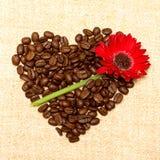 красный цвет сердца цветка кофе предпосылки Стоковое Изображение