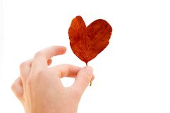 красный цвет сердца Стоковое фото RF
