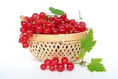 красный цвет смородины Стоковые Фотографии RF