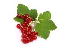 красный цвет смородины Стоковая Фотография RF