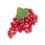 красный цвет смородин свежий Стоковые Изображения