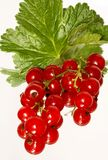 красный цвет смородины Стоковая Фотография