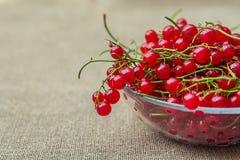 красный цвет смородин шара стеклянный Стоковые Изображения