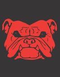 красный цвет собаки быка Стоковое фото RF